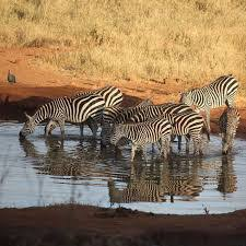 Kenya tours and safaris
