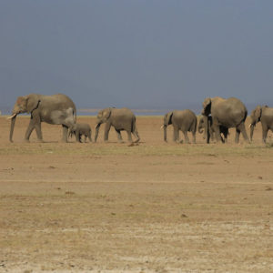 Amboseli, Lake Naivasha & Masai Mara Safari Tour