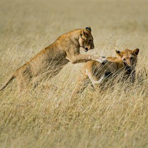 Nairobi Safari
