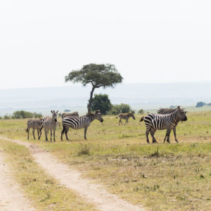 Masai Mara Safari Tour