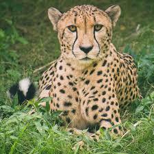 Day Trip to Amboseli From Nairobi