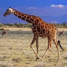 Nairobi Safari Tours